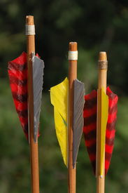 stock photo of fletching  - Color wooden arrows ready to shut with green background - JPG