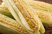 picture of zea  - sweet corn - JPG