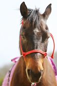 Young Beautiful Horse Posing For Camera.. Portrait Of A Purebred Young Horse At Summer Corral. Close poster