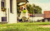 Dog Run Beagle Fun poster