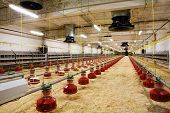 image of hatcher  - The modern and new automated integrated poultry farm - JPG
