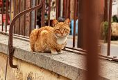 Cyprus Lone Kitten Sitting On Low Wall Behind Brown Fence And Waiting For Some Gift From Passerby. A poster