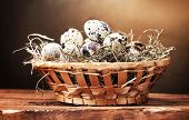 quail eggs in nest on wooden table on brown background