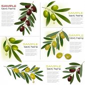 stock photo of olive trees  - Set of backgrounds with green and black olives - JPG