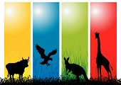 stock photo of zoo animals  - Wild Animals Strips - JPG