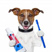 stock photo of animal teeth  - teeth cleaning dog with toothpaste and toothbrush - JPG