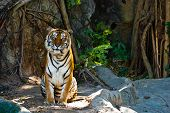 stock photo of tiger eye  - Female wild tiger from Thailand taken in a sunny day can be use for related wild animal concepts and conservation print outs - JPG