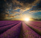 stock photo of lavender field  - Stunning Summer sunset over lavender field landscape - JPG