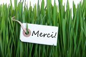 Grass Background With Merci