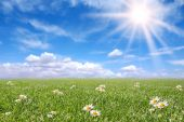 Serene Sunny Field Meadow In Spring poster