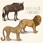image of wildebeest  - Vector illustrations of african animals isolated on a light background - JPG