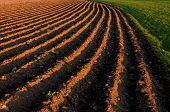 picture of plowed field  - Plowed planting rows in a farming field with an afternoon sun - JPG