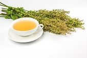 stock photo of sorrel  - Bunch of fresh sorrel and tea cup