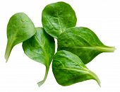 stock photo of rocket salad  - Isolated Fresh Washed Spinach Salad Leaves On White Background - JPG