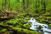 picture of olympic mountains  - Beautiful cascade waterfall in Sol Duc falls trail Olympic national park WA US - JPG