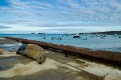 foto of sea lion  - sea lions laying on the dock galapagos islands ecuador  - JPG