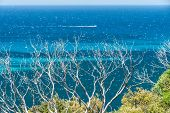 picture of naturalist  - Burnt coastal scrub with blue ocean and small speeding boat beyond - JPG