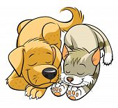 foto of sleeping  - Illustration of sleeping cat and dog isolated - JPG