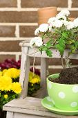 foto of plant pot  - Flowers in pot on stepladder - JPG