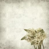 stock photo of bethlehem  - textured old paper background with start of bethlehem flowers - JPG