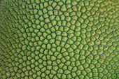 foto of thorns  - background and texture of jackfruit peel have thorn - JPG