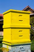 pic of bee keeping  - Image of an yellow wooden freshly painted beehive in a courtyard - JPG