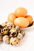 picture of quail egg  - Chicken egg and quail eggs on white background - JPG