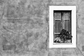 pic of planters  - Closed window with planter Black and White  - JPG