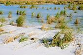 picture of grass area  - Water puddled in a low lying area on the beach with sea oats and grasses - JPG