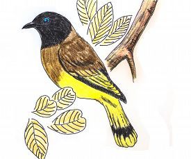stock photo of bulbul  - The original drawing of birds on white paper Black - JPG