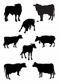From A Series Silhouettes. Animals. Cow