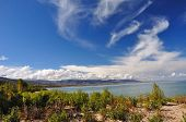 pic of swales  - Young a cottonwood on sandy lakeside with sky and unusual clouds - JPG