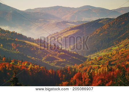poster of Autumn Mountain Forest. The forest is late autumn. Autumn mountain landscape. Sunny autumn in the mountains. Vacation and travel concept