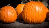 A group of pumpkins are displayed for sale at the farmer's market.