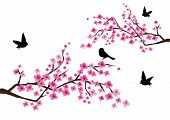 image of cherry-blossom  - Vector illustration of cherry blossom with birds - JPG
