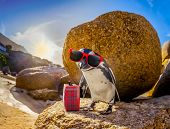 African Penguin With Sunglasses At The Beach poster