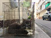 Home Cat In A Cage, Locked Up By The Owner poster