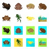 Isolated Object Of Wildlife And Bog Logo. Collection Of Wildlife And Reptile Stock Symbol For Web. poster