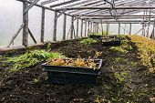Boxes With Seedlings In The Greenhouse. Plant Seedlings For Planting. Young Plants In Black Boxes. G poster