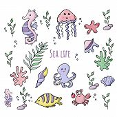 Colorful Set Of Various Sea Creatures With Shells poster