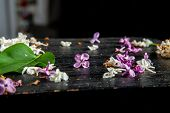 White And Purple Fallen Lilac Flowers And Green Leaf On The Black Table. Dark Background Of Green Le poster