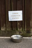 A Water Bowl For Dogs And A Sign Canine Hydration Station poster