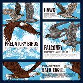 Falconry Hunting Sport, Wild Predatory Birds Hunt Sketch Posters. Vector Eagles, Falcons And Predato poster