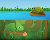 Reptiles Amphibians Banner Set. Cartoon Illustration Of Reptiles Amphibians Vector Banner Set For We poster