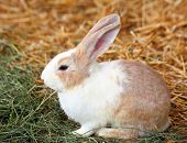 stock photo of thumper  - rabbit on grass - JPG