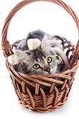 image of yellow tabby  - Striped cat with a tape in a wattled basket - JPG