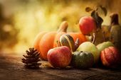 image of planting trees  - Autumn nature concept - JPG