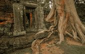 foto of raider  - Giant tree covering Ta Prom and Angkor Wat temple Siem Reap Cambodia Asia - JPG