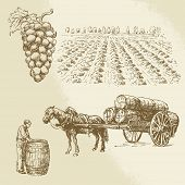 vineyard, harvest, farm - hand drawn collection