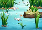 picture of duck pond  - Illustration of many animals in a pond - JPG